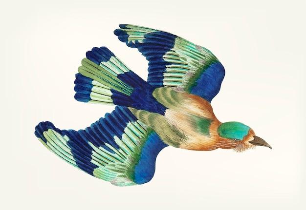 Hand drawn of blue jay