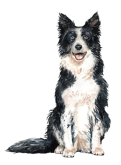 Hand drawn border collie watercolor dog.