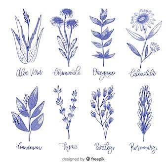 Hand drawn botanical collection