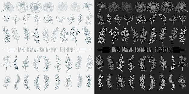 Hand drawn botanical elements.