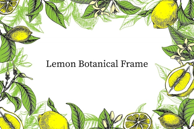 Hand drawn botanical frame with lemons, leaves, branches, flowers and buds