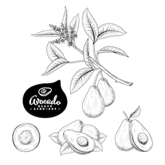 Рисованной ботанические иллюстрации