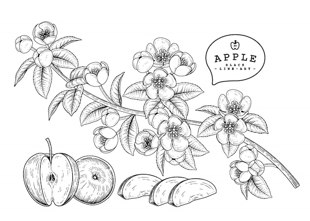 手描きの植物イラスト