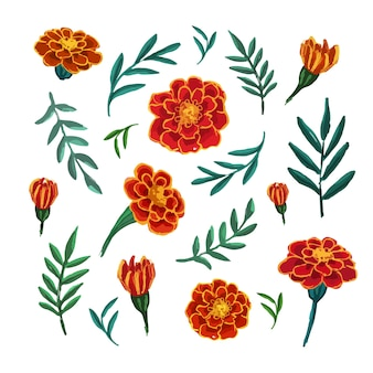 Hand drawn botanical  sketch of marigold flowers and leaves