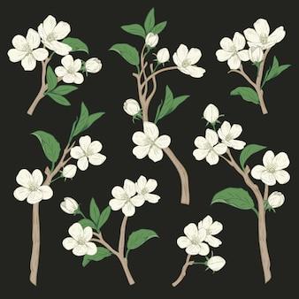 手描きの植物の白い花の枝が黒に