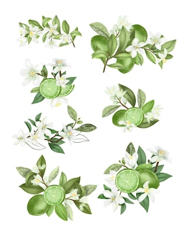 Вручите оттянутые букеты и композиции из цветущих веток дерева лайма (зеленый лимон), изолированные на белом фоне