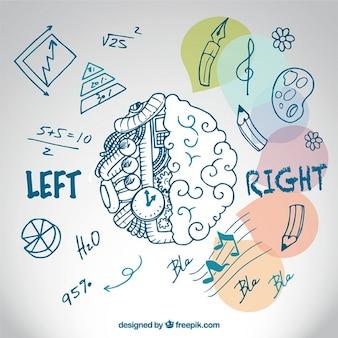 Hand drawn brain hemispheres Premium Vector