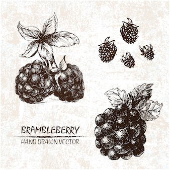 Hand drawn brambleberry design