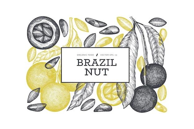 손으로 그린 브라질 너트 분기 및 커널 디자인 서식 파일. 흰색 바탕에 유기농 식품 그림입니다. 레트로 너트 그림입니다.