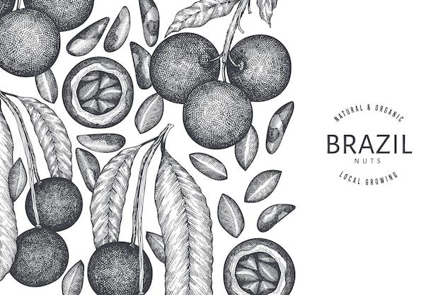 Вручите оттянутую ветвь бразильского ореха и шаблон ядер. иллюстрация органических продуктов питания на белом фоне. ретро гайка иллюстрации. ботанический баннер в стиле гравировки.