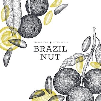 손으로 그린 브라질 너트 분기 및 커널 템플릿. 흰색 바탕에 유기농 식품 그림입니다. 레트로 너트 그림입니다. 새겨진 스타일의 식물.