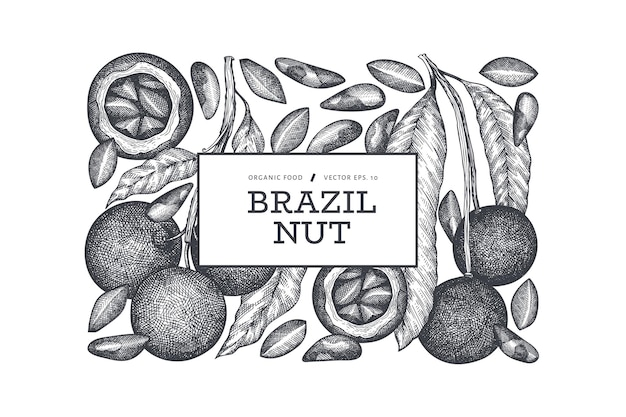 Hand drawn brazilian nut branch and kernels design template.
