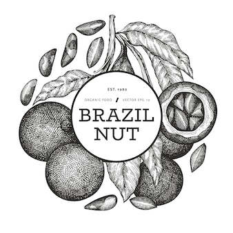 Hand drawn brazilian nut branch and kernels design with engraved style botanical illustration