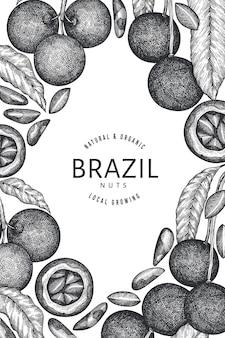Hand drawn brazilian nut branch and kernels  template. organic food  illustration on white background. retro nut illustration. engraved style botanical banner.
