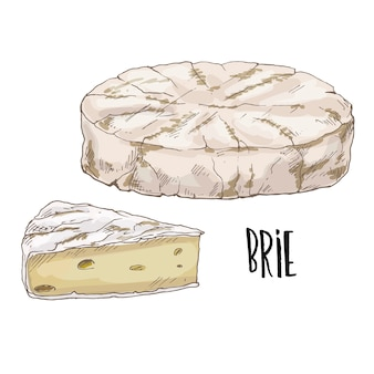 Hand drawn brie cheese illustration