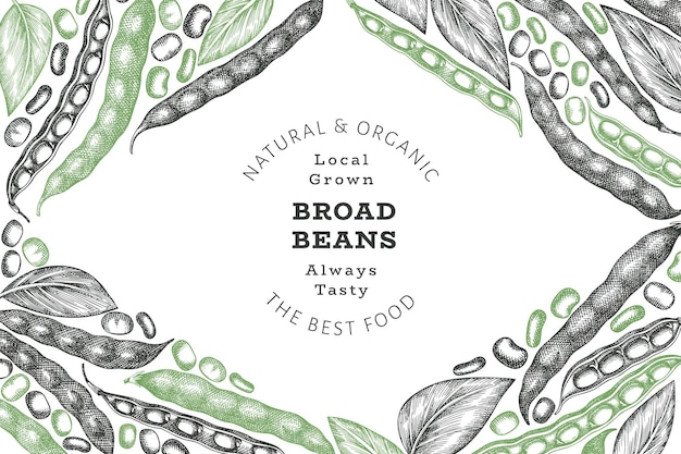 Hand drawn broad beans banner template