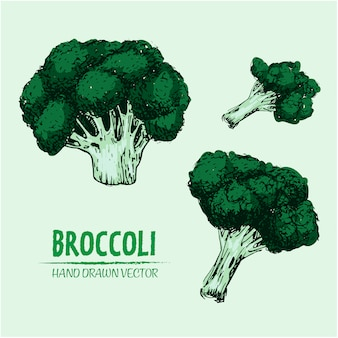 Hand drawn broccoli design