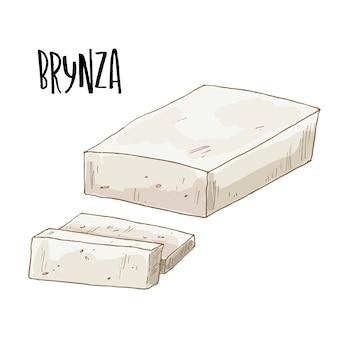 Hand drawn brynza cheese illustration