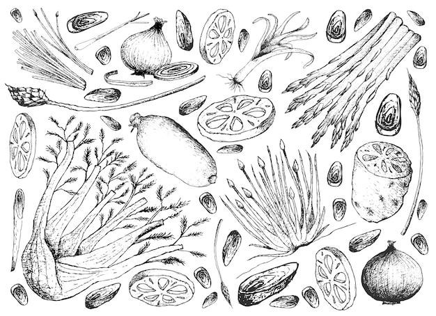 Hand drawn of bulb and stem vegetables background
