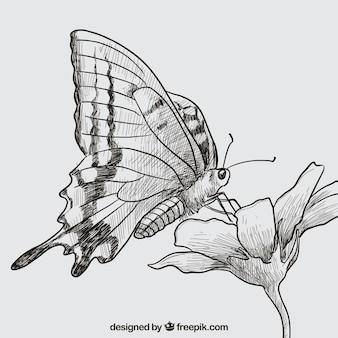 手描き蝶と花
