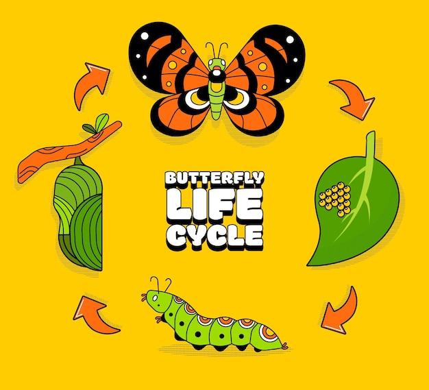 Ciclo di vita della farfalla disegnata a mano