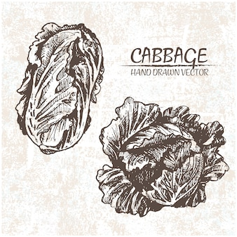 Hand drawn cabbages design