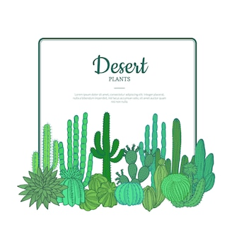 Hand drawn cacti plants. cactuses pattern