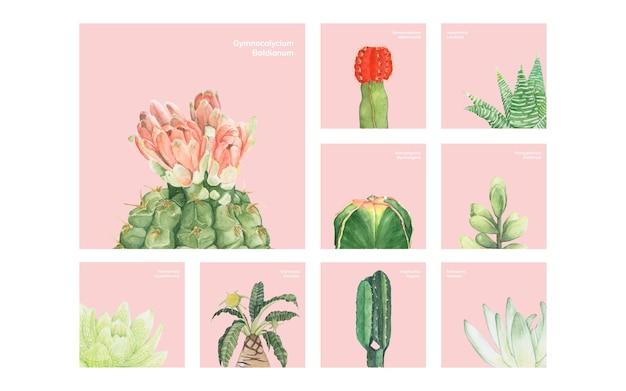 手描きのサボテンと多肉植物
