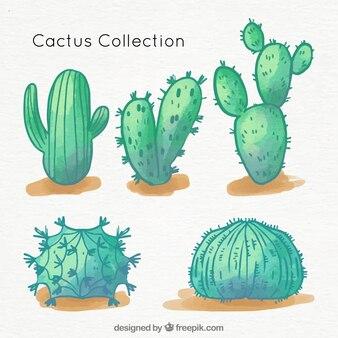 Сборник кактусов ручной работы