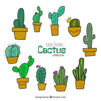 Рисованные кактусы с забавным стилем