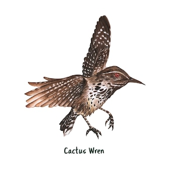 Hand drawn cactus wren bird