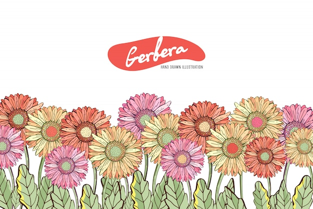 Hand drawn camomile or gerbera flowers. spring or summer card template with space for your text