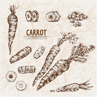 Hand drawn carrot collection