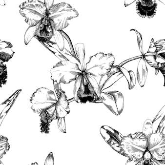 Hand drawn cattleya orchid flower pattern background