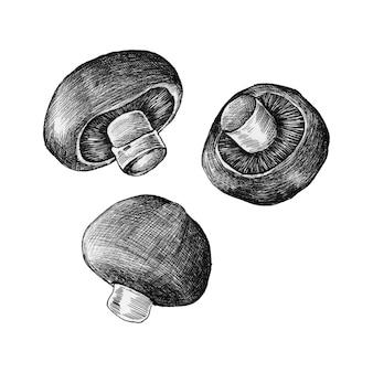 손으로 그린 샴 피 뇽 버섯 절연
