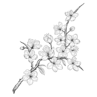 Hand drawn cherry blossom flowers and leaves drawing illustration.