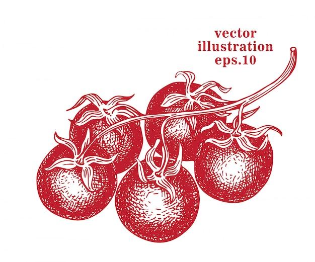 Нарисованная рукой иллюстрация томата черри. гравированные эскизы