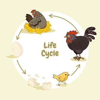 Ciclo di vita del pollo disegnato a mano