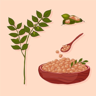 Нарисованные от руки бобы нута и иллюстрация растений