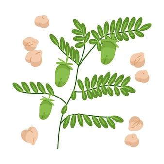 手描きひよこ豆と植物のイラスト