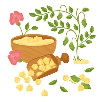 手描きのひよこ豆と植物