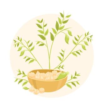 Нарисованная рукой иллюстрация растений и фасоли нута