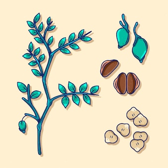 Hand-drawn chickpea beans and plant illustration