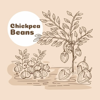 Hand drawn chickpea beans and plant
