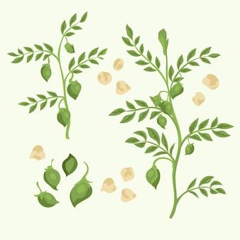 Fagioli e piante di ceci disegnati a mano