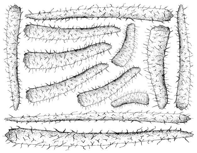 Hand drawn of chinese yam on white background