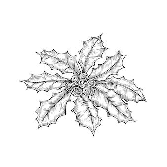 手描きのクリスマスのヒイラギの葉の束とベリーベクトルイラスト抽象的なスケッチ冬のホーリー...
