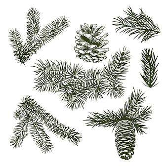 手描きのクリスマス松の枝と円錐形