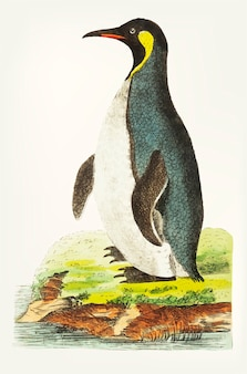 Hand drawn cinereous-brown penguin
