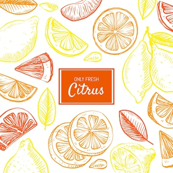 Hand drawn citrus background